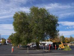 before-pruning-in-parking-lot