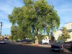 before-pruning-near-heritage-bank