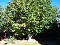 pruning-before-2