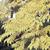 Amur Cork Tree thumbnail photo