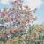 Locust tree thumbnail photo