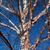 River Birch Tree thumbnail photo
