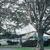 Sycamore Tree thumbnail photo